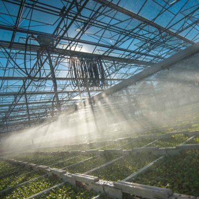 agenturwerk-fotografie-lueske-jungpflanzen (1)